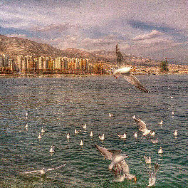 دریاچه مصنوعی شهدای خلیج فارس