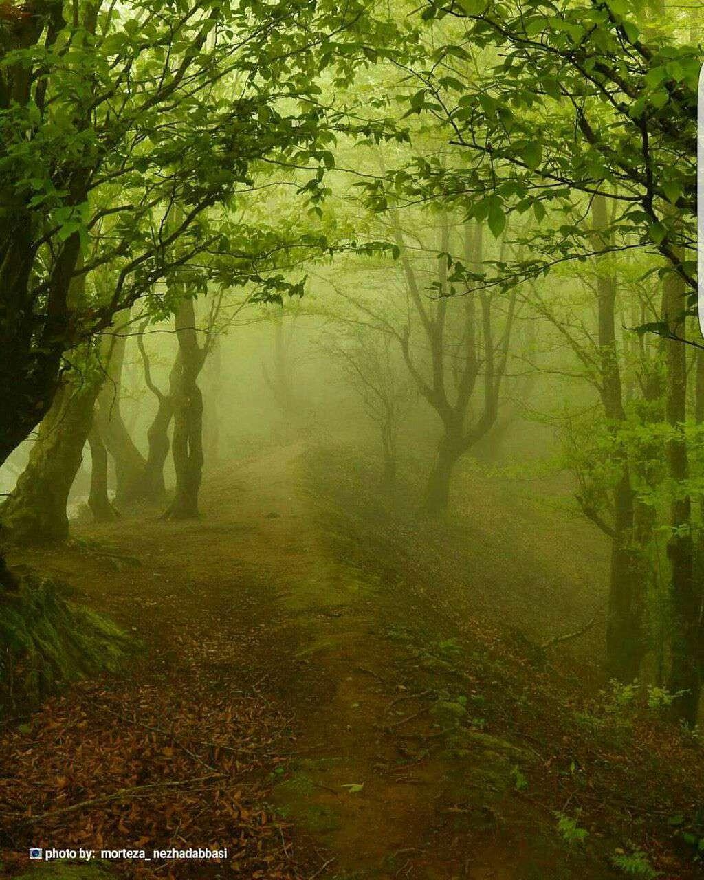 جنگل عطاکوه
