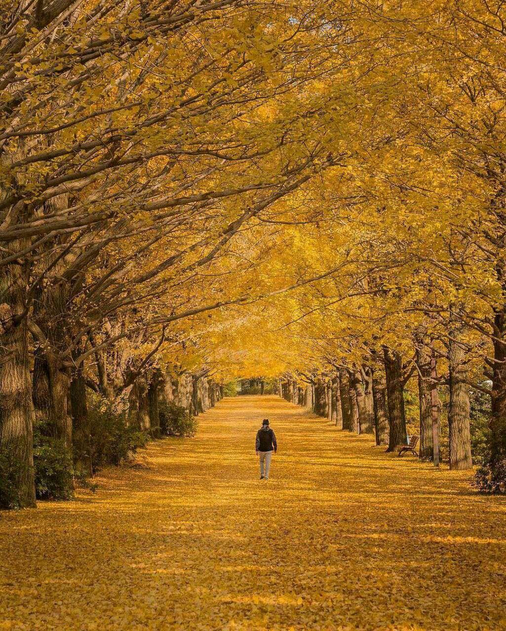 تنها میان درختان پاییزی