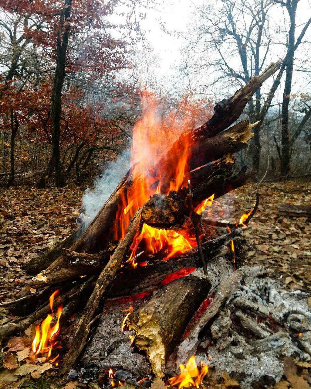 آتش در جنگل پاییزی