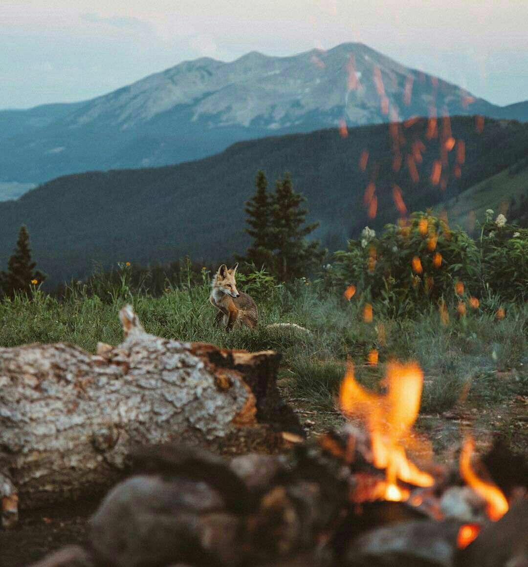 روباهی پشت آتش