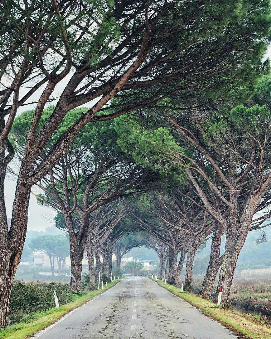 جاده ای محصور میان درختان