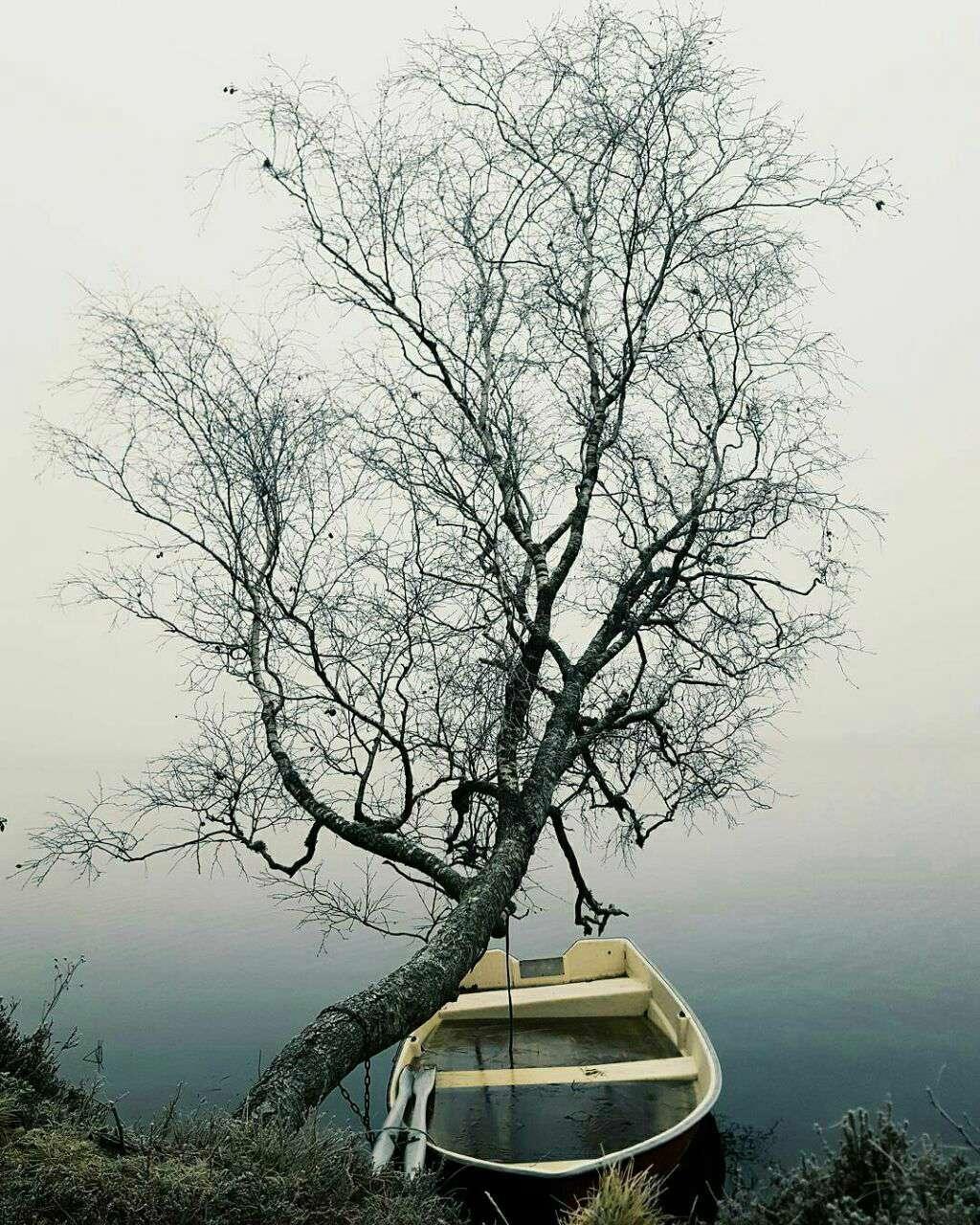 قایق بسته شده به درخت