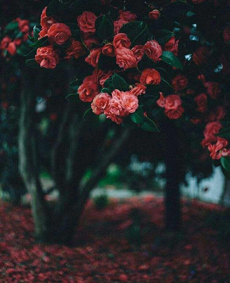 درختان پر گل