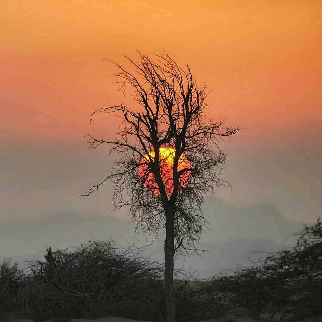 خورشید پشت درخت