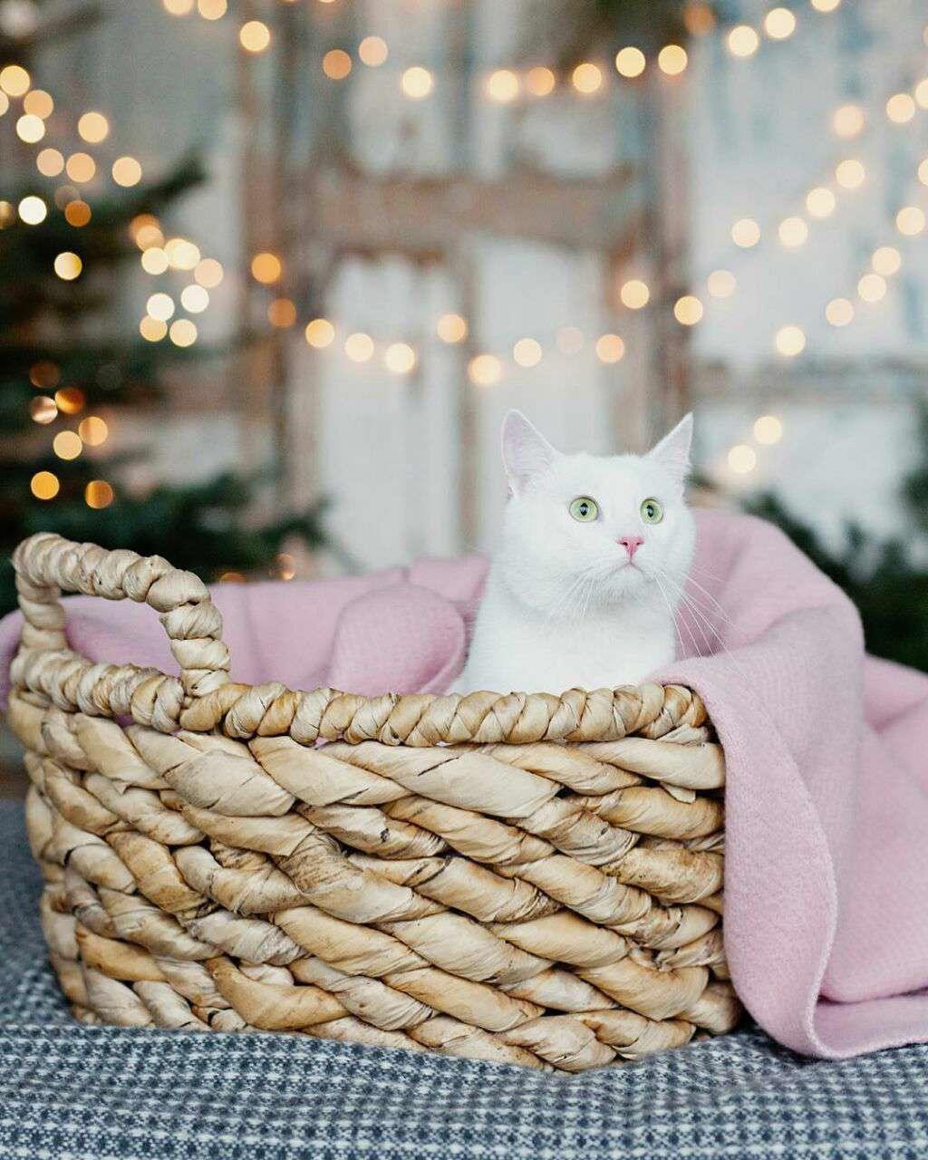 گربه ای با چشمان سبز