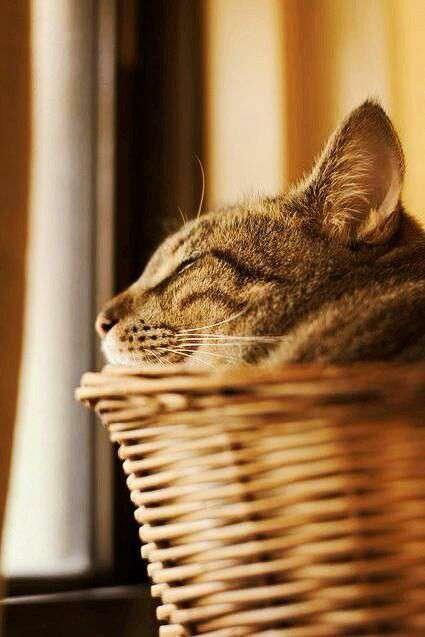 گربه ای درحال استراحت