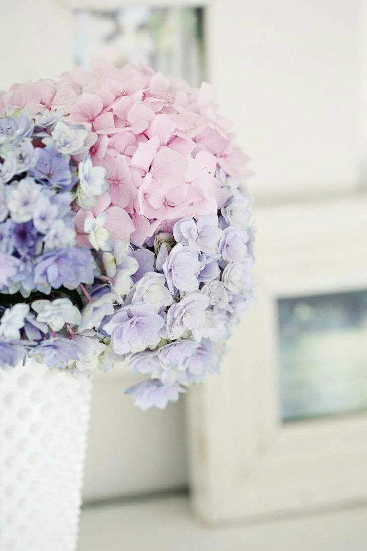 گلهای بنفش و صورتی