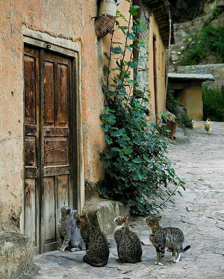 گربه های منتظر