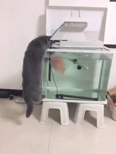 ماهی شیطون