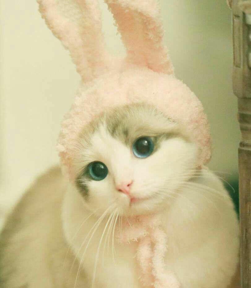 گربه ای با کلاه خرگوشی