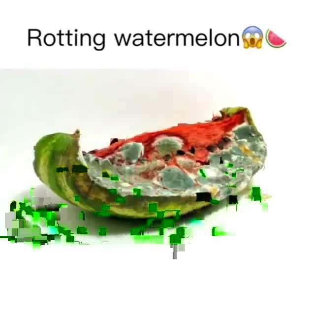 کپک زدن هندوانه