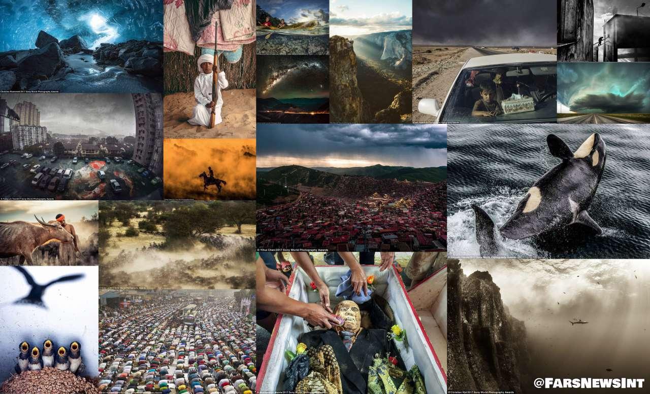 تصاویر برگزیده جایزه عکاسی «سونی» 2017