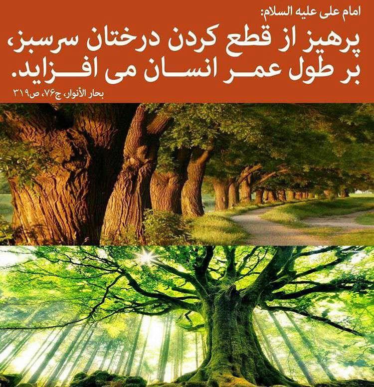 حدیثی از امام علی در مورد قطع کردن درخت