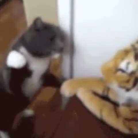 تصوير متحرك گربه عصباني