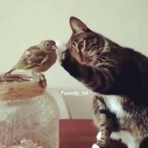 تصوير متحرك گربه متعجب و پرنده نترس