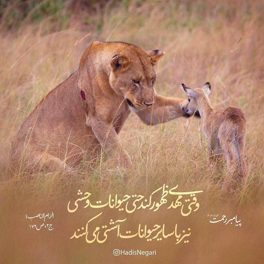 آشتي حيوانات وحشي با ساير حيوانات