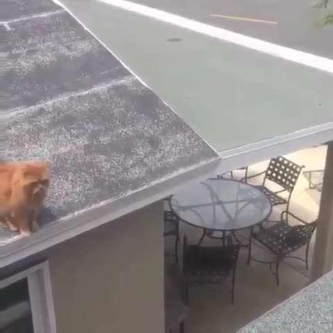 تصوير متحرك پرش ناموفق يك گربه