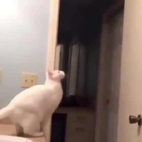 تصوير متحرك گربه جسور