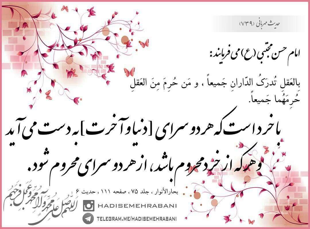 حدیثی از امام حسن مجتبی در مورد باخرد