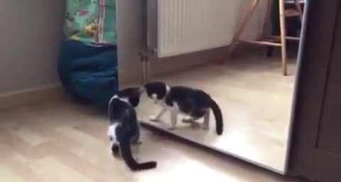 تصوير متحرك گربه خوددرگير