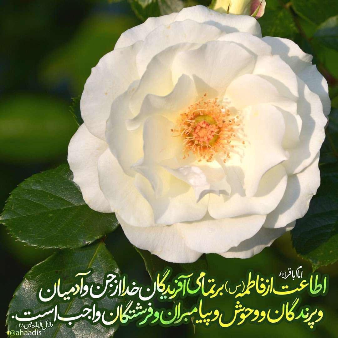 اطاعت از حضرت زهرا(س)واجب است