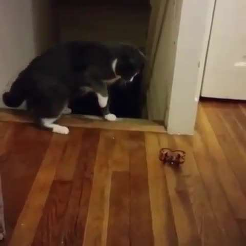 تصوير متحرك گربه ترسو