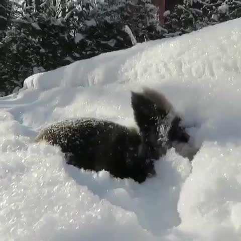 تصويرمتحرك خرگوشي درحال برف بازي