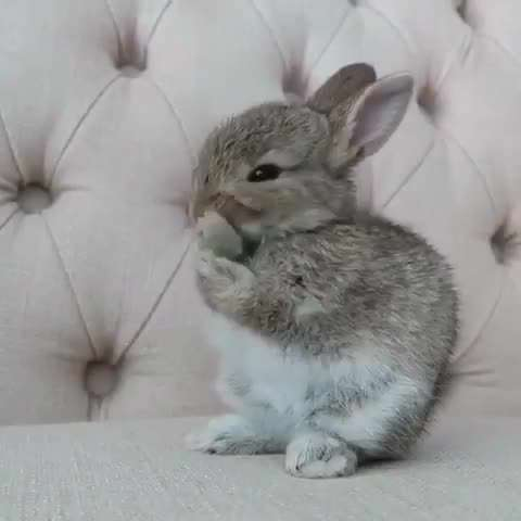 تصويرمتحرك خرگوش درگير