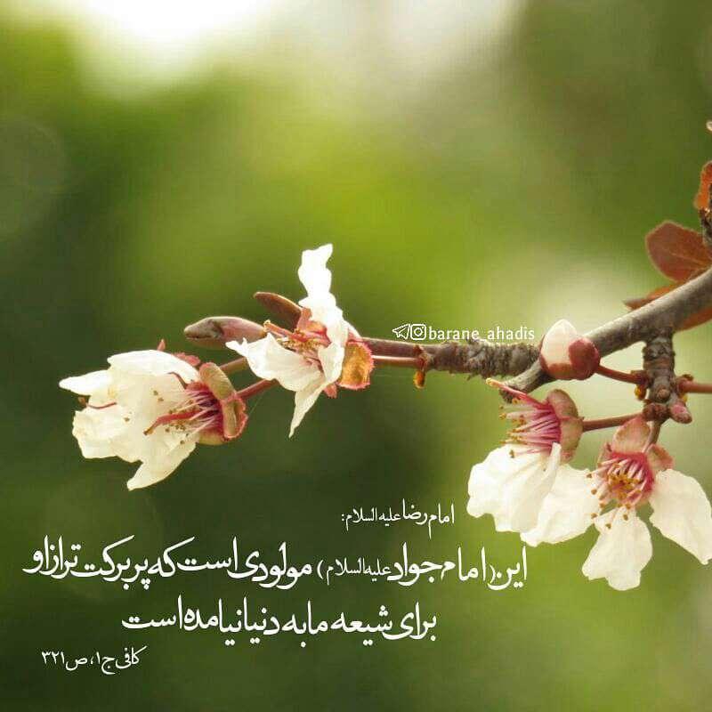 حدیثی از امام رضا