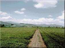 جاذبه های طبیعی استان گیلان