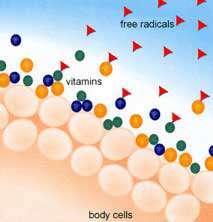 سلول های بدن