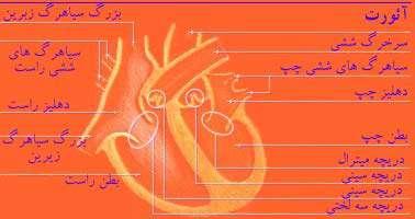 گام پایانی: درون قلب