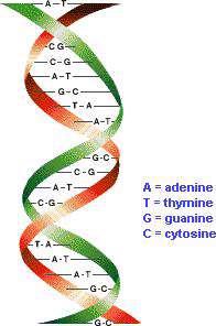 اسیدهای نوکلئیک، dna و rna