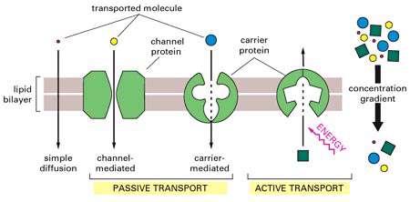 انتقال مولکولها