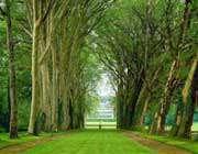 باغ، بستان،بهشت