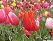 تصویری از گل