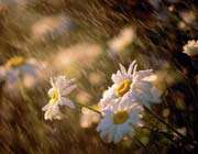 باران رحمت الهی