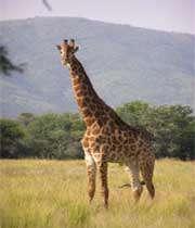 نگهبان حیات وحش تانزانیا