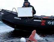 1 کیلو متر شنا در قطب شمال