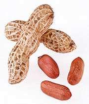 земляной орех