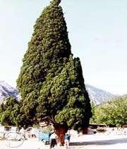 Harzevil-Cypress
