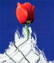 متن زیبا در مورد شهید و شهادت leilaaaaa.blogfa.com