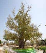 السياحة في جزيرة كيش الايرانية
