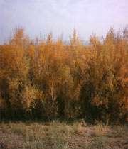 جاذبه های طبیعی استان یزد