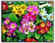 گل، باغ گل