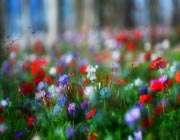 دشت گل