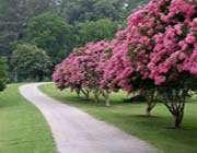 درخت ، منظره، جاده ، جنگل