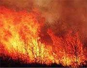 آتش سوزی و جنگلبانان