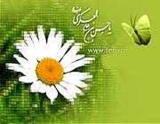 (الإمام الحسن العسكري ( عليه السلام